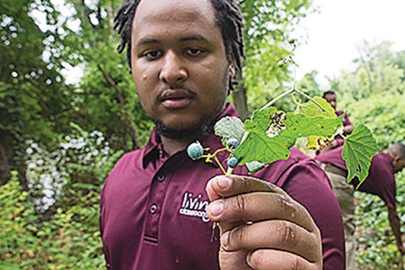 Malik Hough holds a piece of invasive porcelain berry vine that has overrun the islands and that the Green Team is working hard to remove