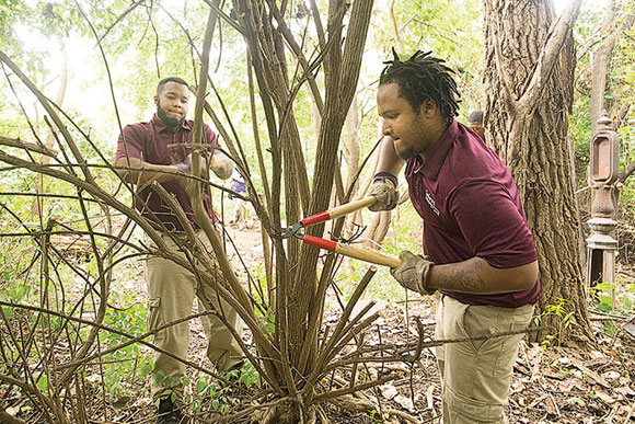 Adonis Santos and Malik Hough use tools to pare the branches of an invasive honeysuckle bush